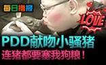 每日撸报4.28:真爱之吻!PDD献吻小骚猪